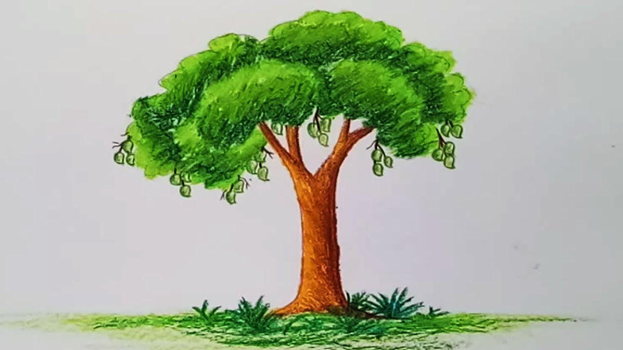 How To Draw A Mango Tree Step By Step Easy Draw